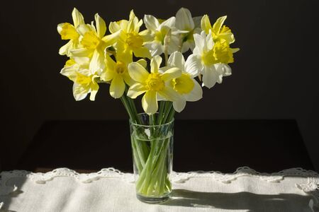 A bouquet of yellow and white daffodils in a glass on a linen napkin on a dark background and light from the window Imagens
