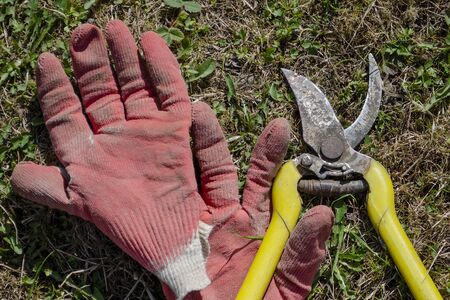Red rubberized gloves for gardening and an old yellow pruner