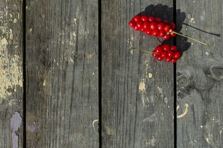 Red berries of Siberian lemongrass on a wooden aged background in the upper right corner Stock Photo