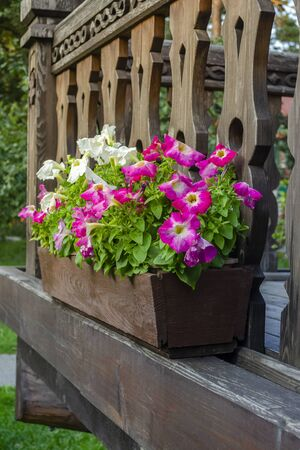 Wooden balcony adorned with petunias