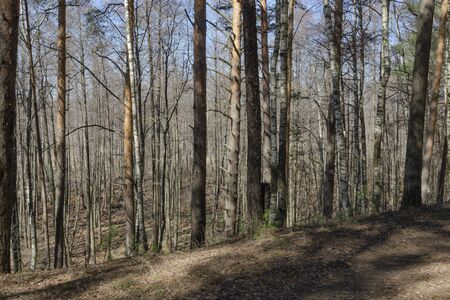 Spring leafless mixed forest trail on a hill
