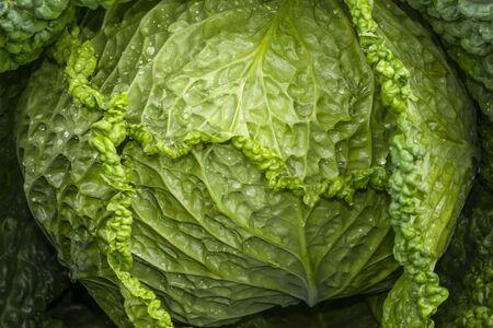 Savoy cabbage forks close-up. Natural background. Brassica oleracea var. sabauda Stock fotó