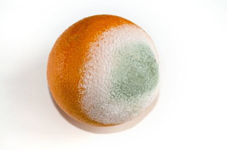 Orange orange with green and white mold on a white background