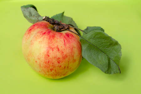 Red striped apple with a shank and leaves on a bright green background