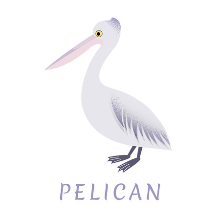 An image of a pelican on a white background. Vector. Banco de Imagens - 115446379