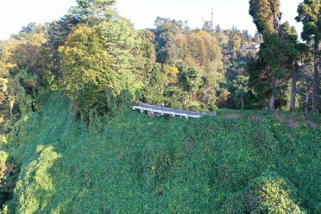 A train on a lush green forestundefined