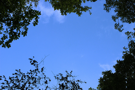 Tree leaves over blue cloudy sky background with copy space area
