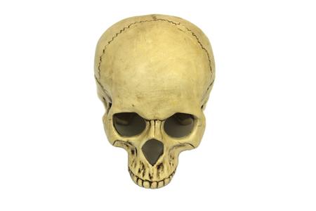Human skull isolated on white background 免版税图像
