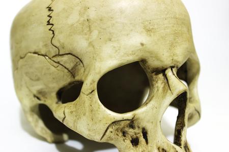 Close up human skull on white background