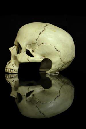 Human skull in profile isolated on black background