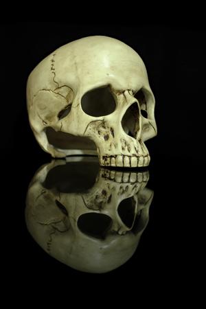 Human skull isolated on black background 免版税图像
