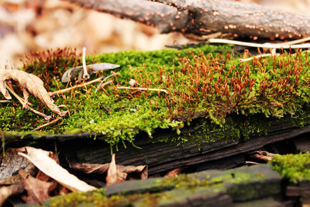 Moss-covered wood in autumn forest Banco de Imagens