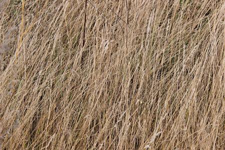 Autumn grass background 免版税图像