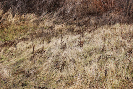 Field with dry grass in autumn