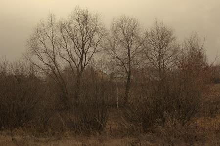 Gloomy autumn landscape