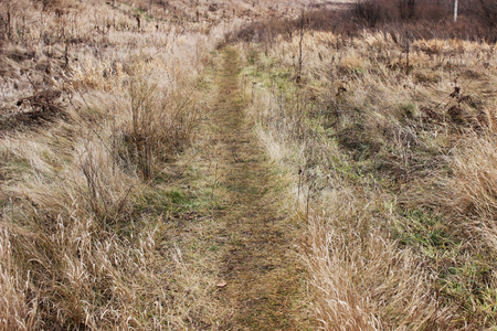 Footpath leading through the field