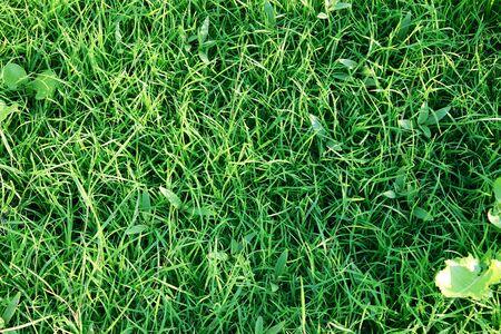 Background of green grass 免版税图像