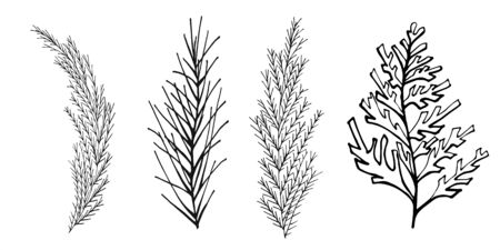 Set of sprigs of conifers black outline on a white background