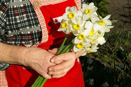 A bouquet of daffodils in the hands of a woman of advanced age. Stock fotó
