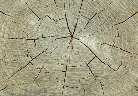 Texture and background of an old cut tree trunk. A surface with a beautiful natural pattern. Computer desktop wallpaper.