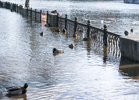 Spring. The snow melts, the water level in rivers and lakes rises. Flooding in the park. Ducks swim along the footpaths.