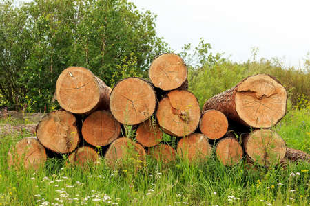 logging: a log on green grass in summer forest