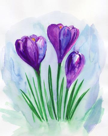 Violet  spring crocuses. Floral greeting card. Violet floral bouquet.Watercolor illustration. 写真素材