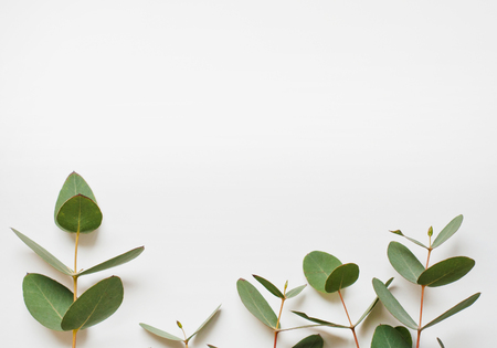Eucalyptus branches on white background  Flat lay, top view