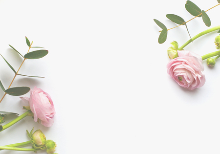 Frame of flowers, pink ranunculus flowers and eucalyptus branches on white background. Flat lay, top view.