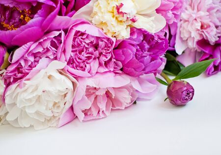 Beautiful flowerspink and white peonies on white background. 写真素材