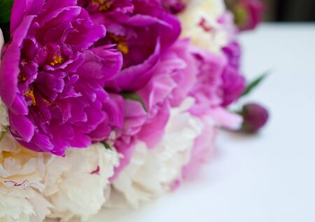 Beautiful flowers pink and white peonies on white background.