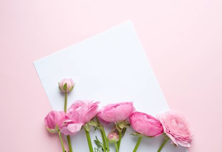 A bouquet of pink ranunculus flowers. A white sheet of paper lies on pink paper. Top view, copy space. Concept Mother's Day, Family Day, Valentine's Day