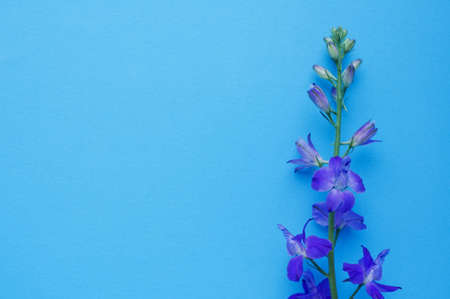 Purple delphinium flower on a blue background. Top view, copy space. Concept Mother's Day, Family Day, Valentine's Day