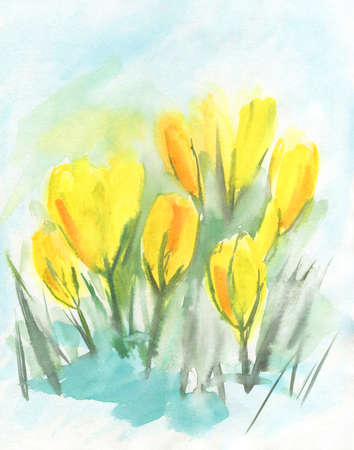 Watercolor yellow crocuses. Saffron flowers. Spring flowers primroses. Drawn by hand.