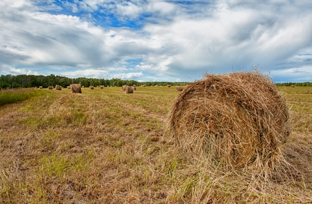 a haystack on a background of cut grass on a Sunny summer day with cloudy skies