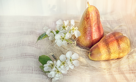 Pear still life with flowers art on the background of a fabric with beautiful sunlight, tinted.