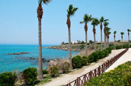 The road along the rocky sea coast with palm trees, shrub and grasses on a Sunny day.