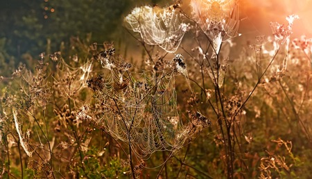 Autumn landscape with a spider web on meadow grass covered with drops of dew at sunset, in the sunlight.
