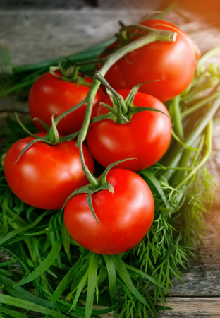 Ripe red tomatoes on a branch lying on the wooden background with the greenery of tarragon, fennel and lettuce in rustic style, the bright sunlight in the morning.