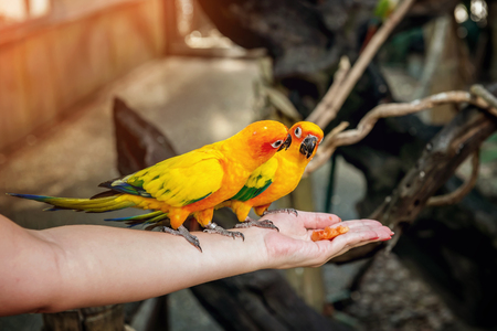 small green and yellow parrot wild in the rainforest sitting stock