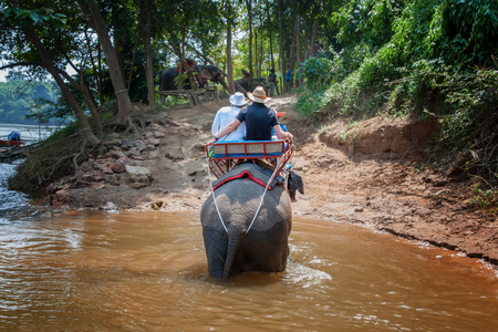 Big elephant crossing the river in the jungle. The horizontal frame.