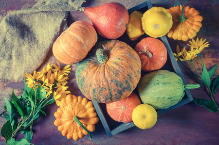 Beautiful mixed color of ripe pumpkins lying on the grass on agricultural land in thanksgiving. Toned.