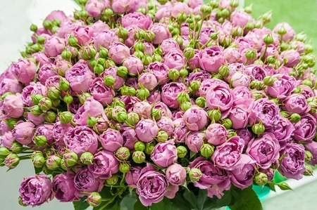A huge bouquet of small pink roses of modern varieties in the bouquet as a gift. Background.