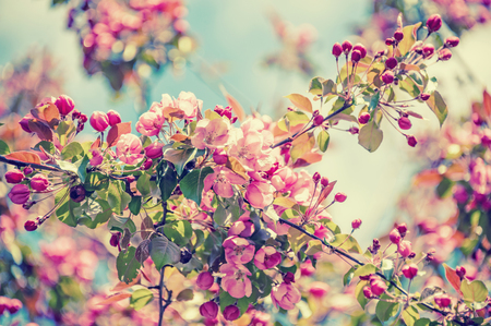 Spring tree branch with small pink flowers copy space vintage spring tree branch with small pink flowers copy space vintage tinted glass stock mightylinksfo