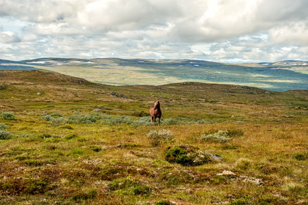 A beautiful horse grazes on a mountain pass covered with moss on a Sunny day.