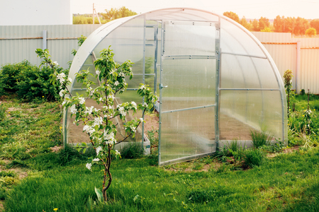 Accelerated cultivation of vegetables in the greenhouse in the country