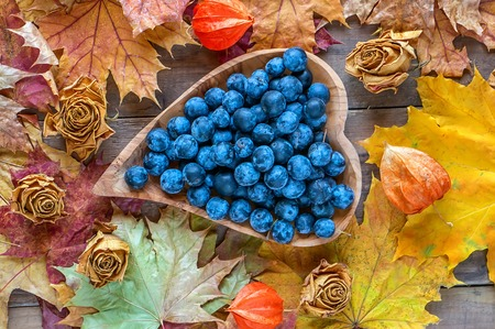 Autumn harvest of blue thorns on a wooden plate in the shape of a heart. Autumn background. Archivio Fotografico