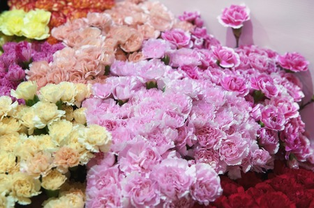 Carnations of pink, green and multi-colors of modern varieties in a bouquet for a gift.