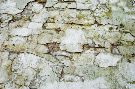 Sawn cross wall texture pattern of stone textured tile. Stone rock tile background. 写真素材