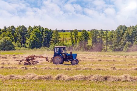 An old tractor turns over the mowed hay on a summer morning for better drying in cloudy weather. Fodder for cows for winter.